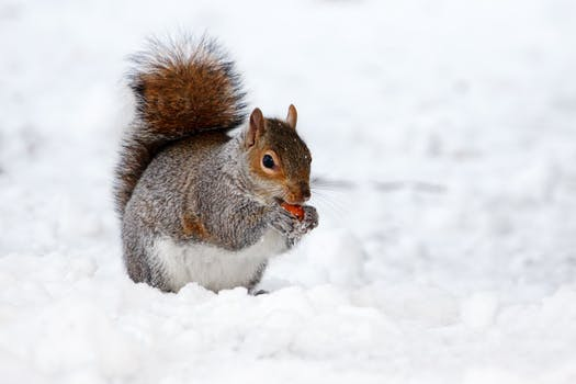 animal-brown-cold-creature-87769