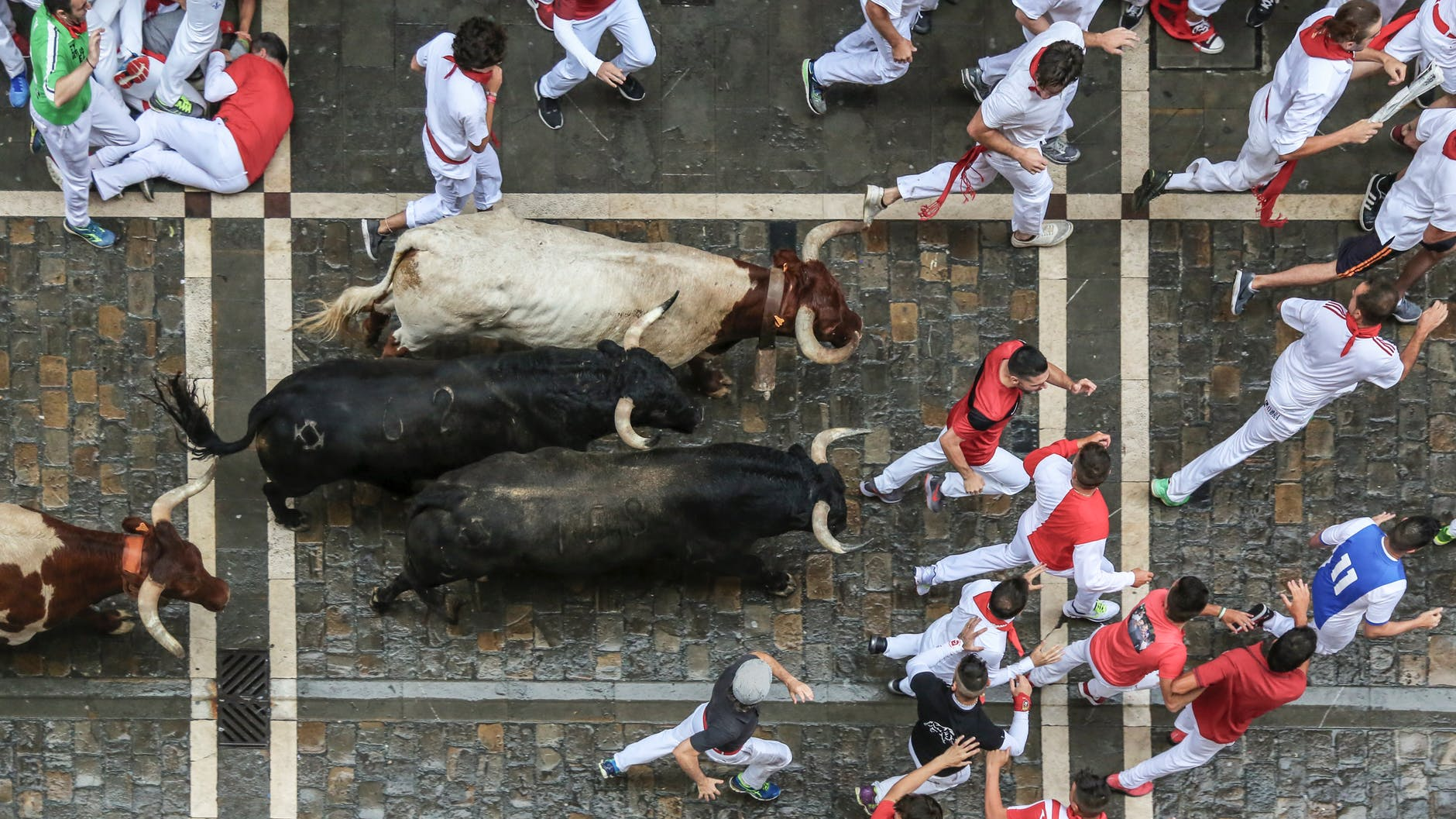bird s eye view photography of bull surrounded with men